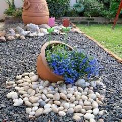 Cheap and Easy Diy Ideas and Garden Design