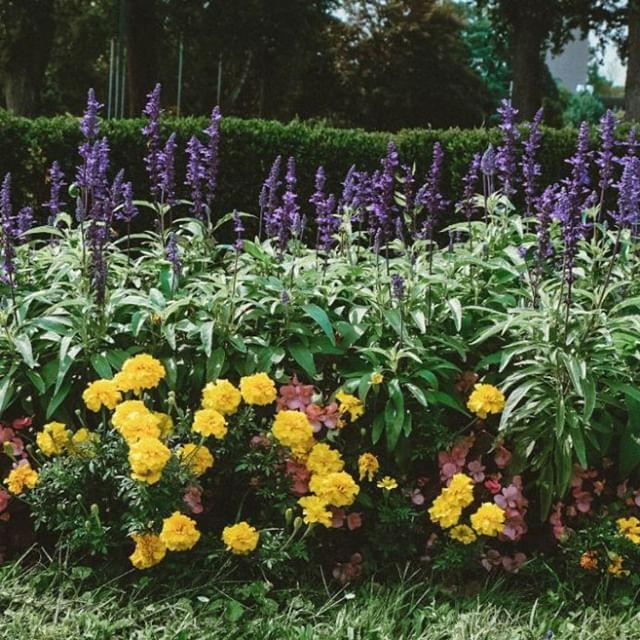 Die Stadtgärtnerinnen und Stadtgärtner kümmern sich um die tägliche gärtnerische Pflege und Ausgestaltung der Gärten, Parks, Kinderspielplätze, Grünstreifen, Alleen und anderer Flächen. 💐Das freut uns besonders und wir genießen den Anblick noch solange es geht 😍 #wienwirdwow #wienerstadtgärten #botanik #floraundfauna