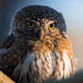 Michael Aagaard Wildlife Photography