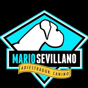 Mario Sevillano - Adiestrador canino