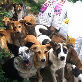 Hundehilfe Russland