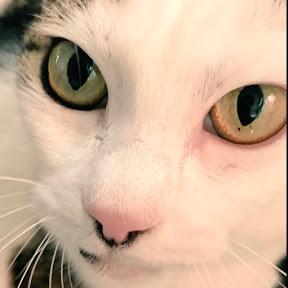 レインボー美少女まなトラ