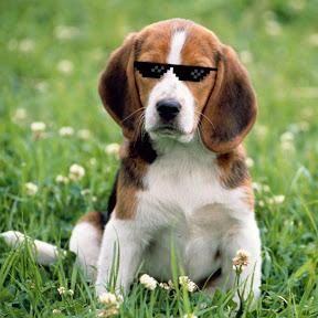 Beagle™