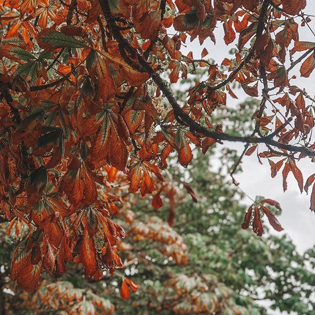 Un automne au Luxembourg 🍂  Changement de saison & de température entre Toulouse & Luxembourg ! Un petit 8 degrés le matin, des feuilles mortes jonchent le sol ... C'est un bonheur de voir ces paysages automnales !  #visitluxembourg #visiteislek #fromtoulousetoluxembourg #automne #autumn #lesardennes #ardennesluxembourgeoises #aeroporttoulouseblagnac #travelphotography #travelblogger