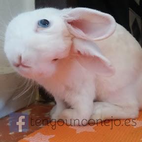 Tengo un conejo