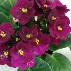 Floresterapia com a Ro