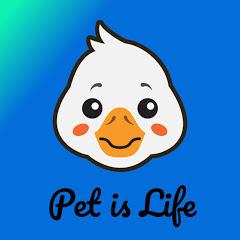 pet is life 2020