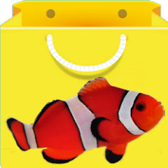 Aquarium Fish India