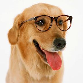 Data Doggo
