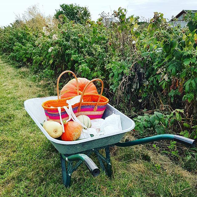 Cueillette champêtre et zéro déchet @neloafrodance 🥦🥒🌶🌽🥕🥔🍆🍅🍓🍒🍑🍐🍏🍎🍇 #cueillette #zerodechet #nature #champêtre #brouette