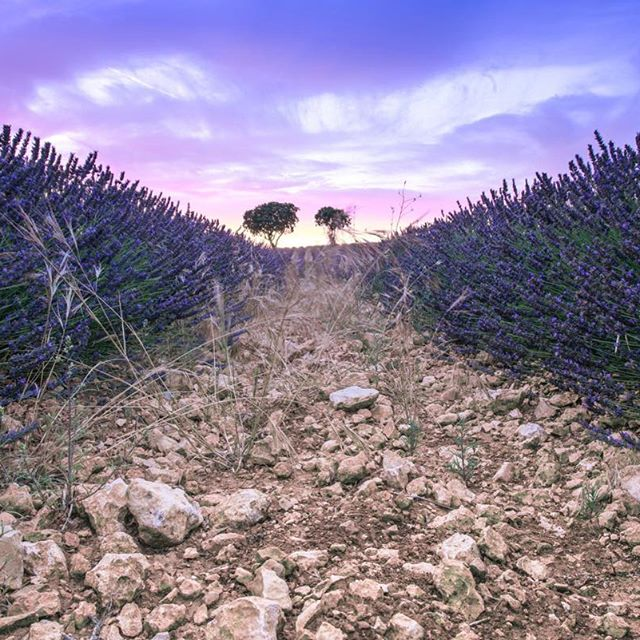 "௸♡ . . . مساكم السعادة 🌷💙☁️ .  ""- كيف أُطهر قلبي؟  إن الله لا يترك بُقعة سوداء في قلبك وأنتَ تستغفره💗🍃' ! . . . 🔹Camera : Nikon D800e 🔹lens : Nikon 14-24mm f/2.8 🔹Shutter speed : 2 pic 🔹Apreture : f/14 🔹ISO : 50 🔹filter :ND . . #Spain #lightphotography #2305M  #lavender #nikon📸 #nikond800e"