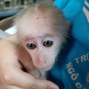 Monkey Su