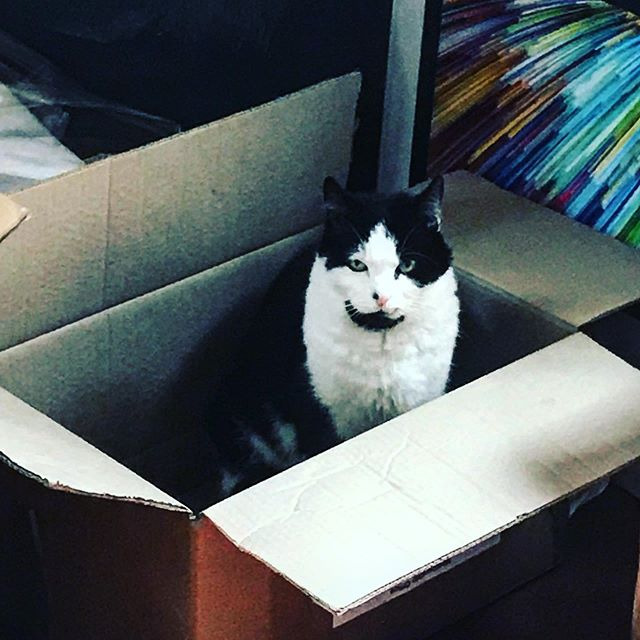 If I fits I sits #ififitsisits #catinabox #squidgy