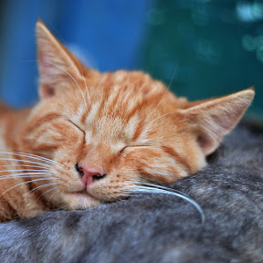 Dormir Mucho - Topic