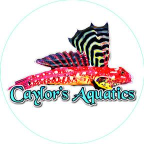 Caylor's Aquatics