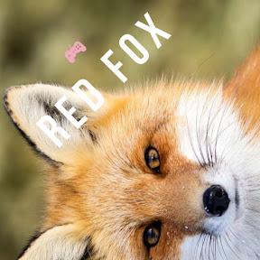 Fox le Red