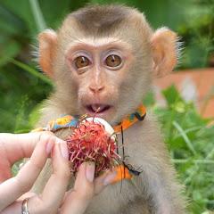 Monkey Mori