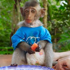 Monkey LooLoo
