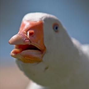 Dolan Dark