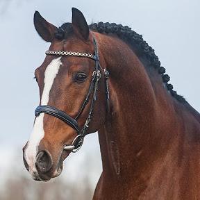 TeamNijhof Stallions
