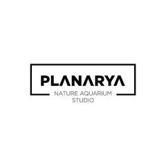 Planarya Studio