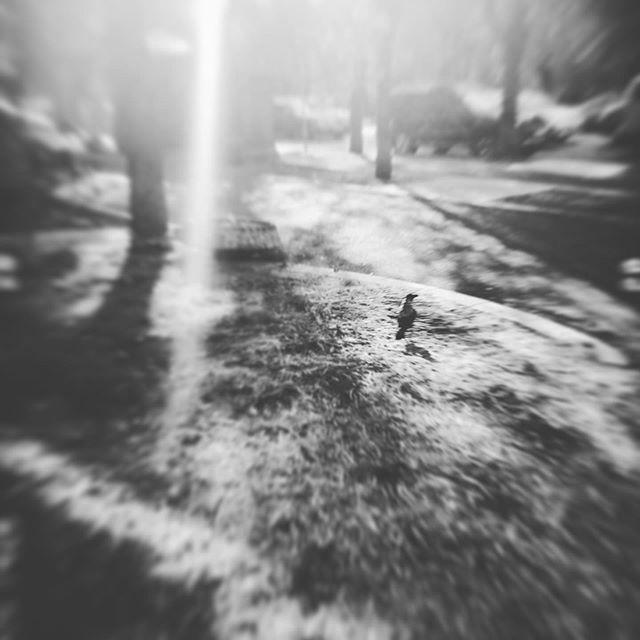 #raven #blackraven ♠️🦅#ворон #черныйворон