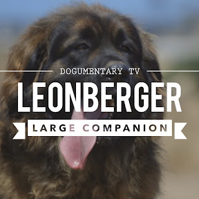 Leonberger - Topic