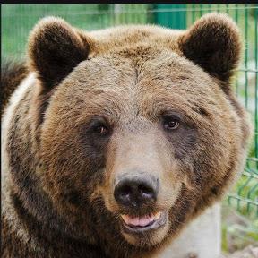 Медведь Мансур - Mansur the Bear