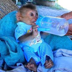 Monkey Soo