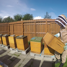 عالم النحل wael sayam