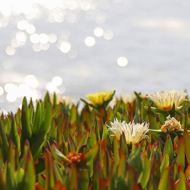 I'm a bokeh junkie 📷❤️ . . . . . .  #photographyeveryday #picoftheday #focus #photogram #visualsoflife #pictureoftheday #photographer #picture #capture #all_shots #instaphoto #bokeh #photoaday #photoofday #bokehlicious #flowers #photographyislife #creative #exposure #photochallenge #photoshoot #photography #amateurphotography #bestoftheday #detroit_igers #bokehphotography  #createcommune #bokeh_addicts  #amateurphotographer #mayflowers