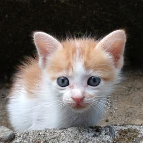 kucing kompleks