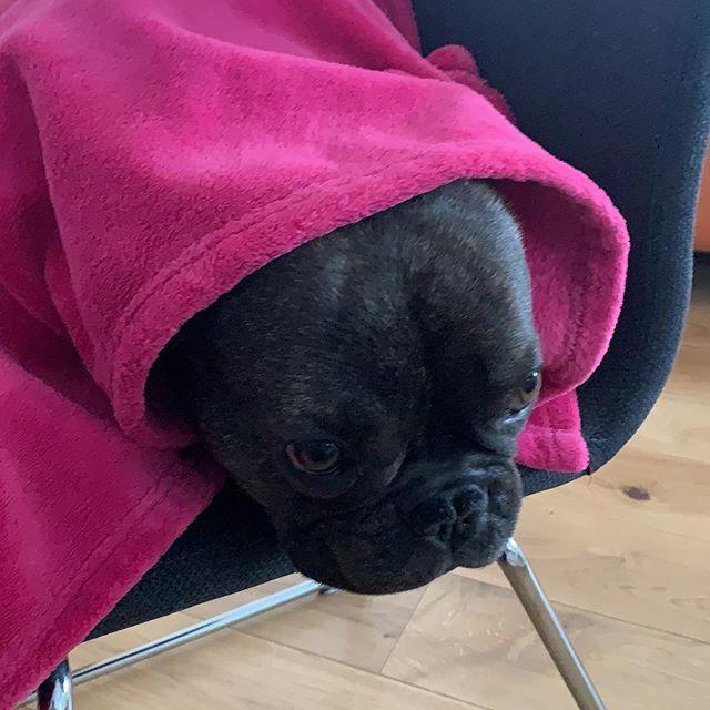 #bulldogge #simmozheim #calw #dogsofinstagram #picoftheday
