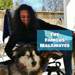 The Famous Malamutes