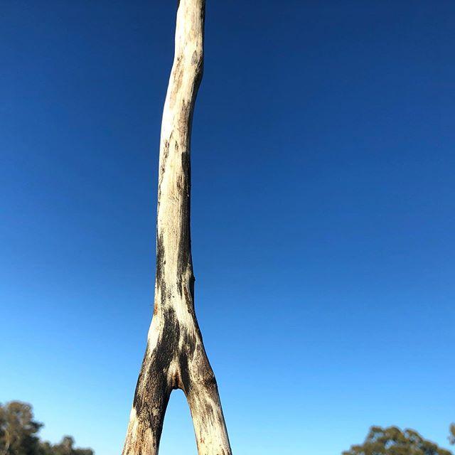 Stick #photography#australia