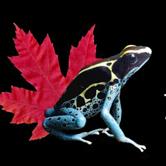 Northern Frogger