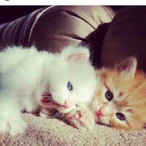 قطط قطط