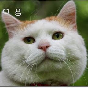 whitecat kerojung