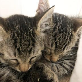 キジ猫のキキとララ/Twin Cats Diary
