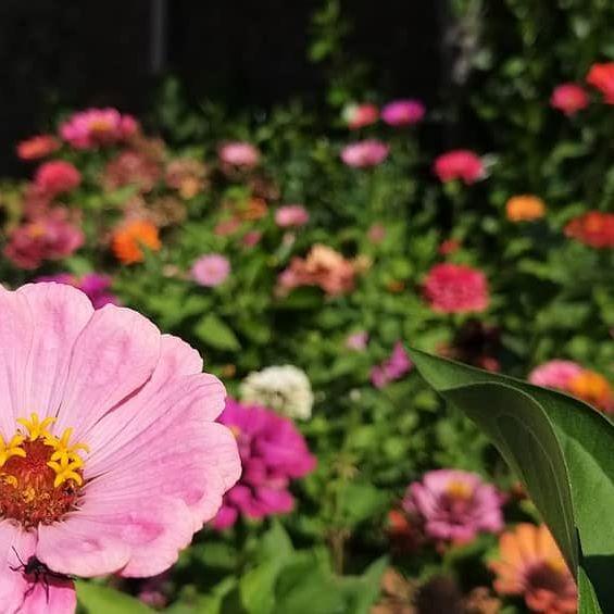 #flowers #fiori #ottone #nature #instanature #picsofday #picsart #pics #l4l #like4like