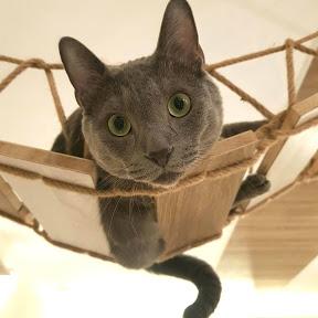 貓欸Camulet