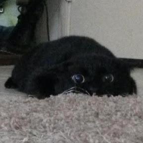 Безумный котенок