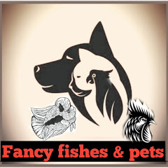 Fancy fishes & pets