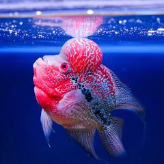 Exotic Aquarium Fish