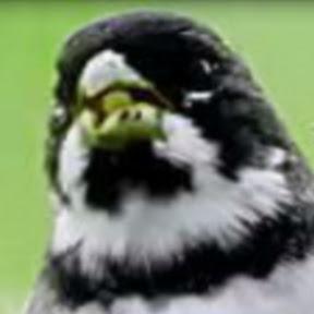 Canal dos Pássaros