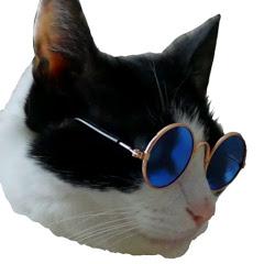 고양이뉴스
