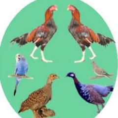 All Birds breeding & care tips