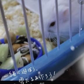 Hami el Hamster