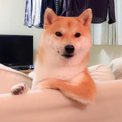 柴犬だいふく daifuku_channel