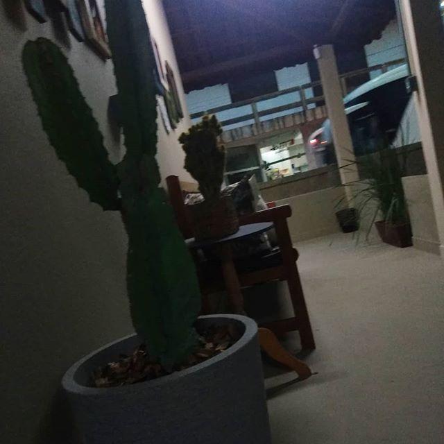 i like cactus 😂🌵